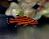 スイスガード Photo by Crown fishさん