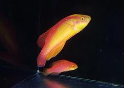 フレームラスペア Photo by Crown Fishさん