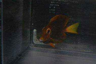 ハイブリ個体 Photo by ティアラさん