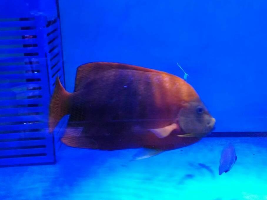 クラリオン Photo by Crown Fishさん