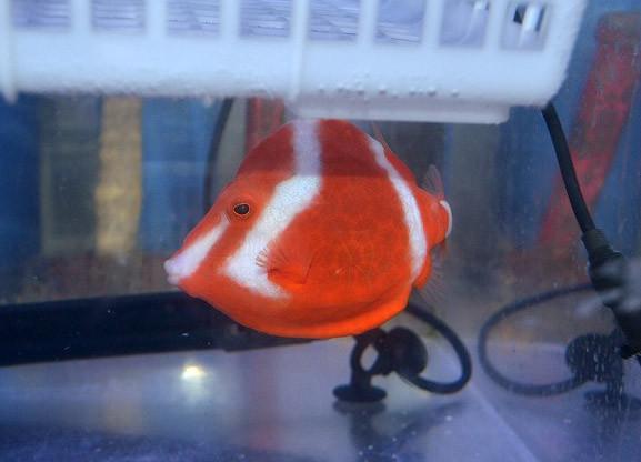 ホワイトバードボックス Photo by 生麦海水魚センターさん